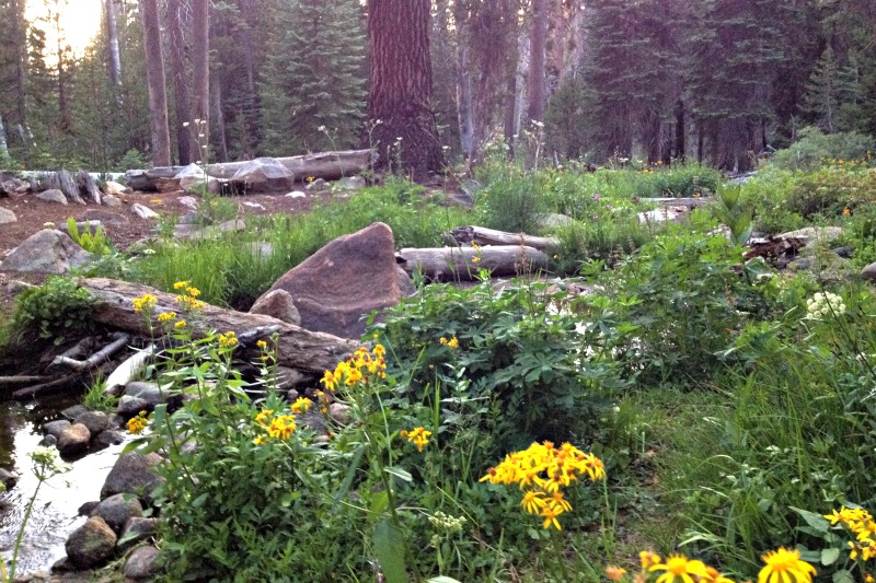 Sequoia National Park - Clover Creek - Campfire Chic