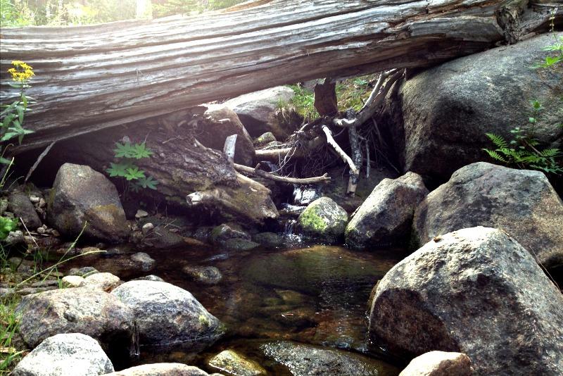 Sequoia National Park - Clover Creek Log - Campfire Chic