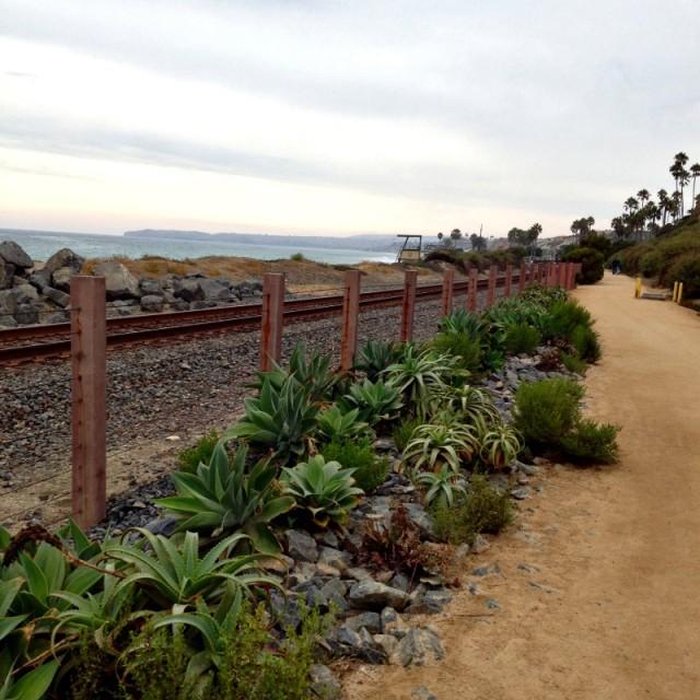 Drought Tolerant Plants Along San Clemente Beach Trail - Campfire Chic