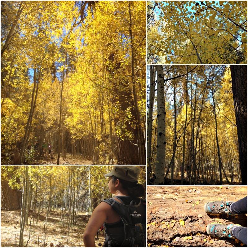 Aspen Grove in San Bernardino National Forest